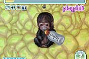 My Funny Ape